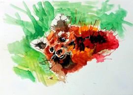540-Red Panda