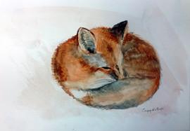 539-Fox Nap SOLD