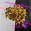 Thumbnail: Spicy *Dots Mix*