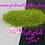 Thumbnail: Katydid *Fine*