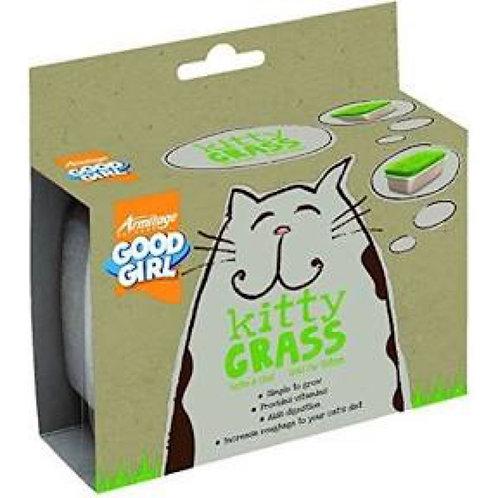 Kitty Grass