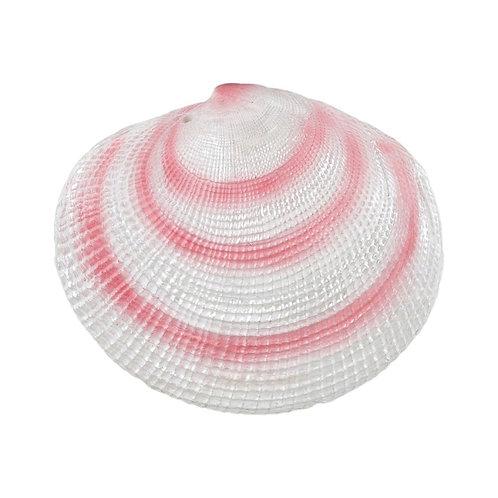 Ornamental Seashell