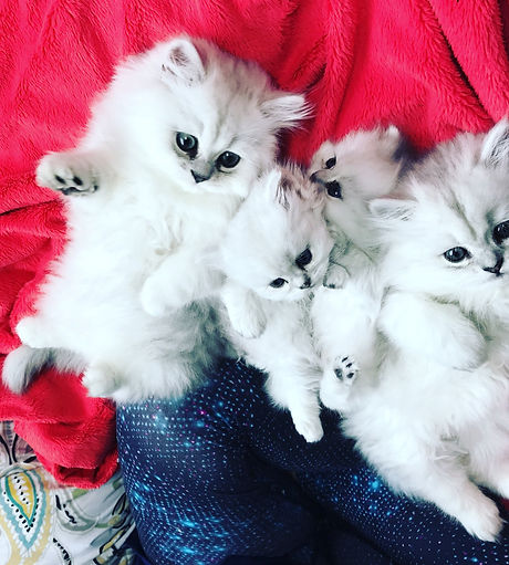 Rainbow & Ivy babies fall Litter 2017