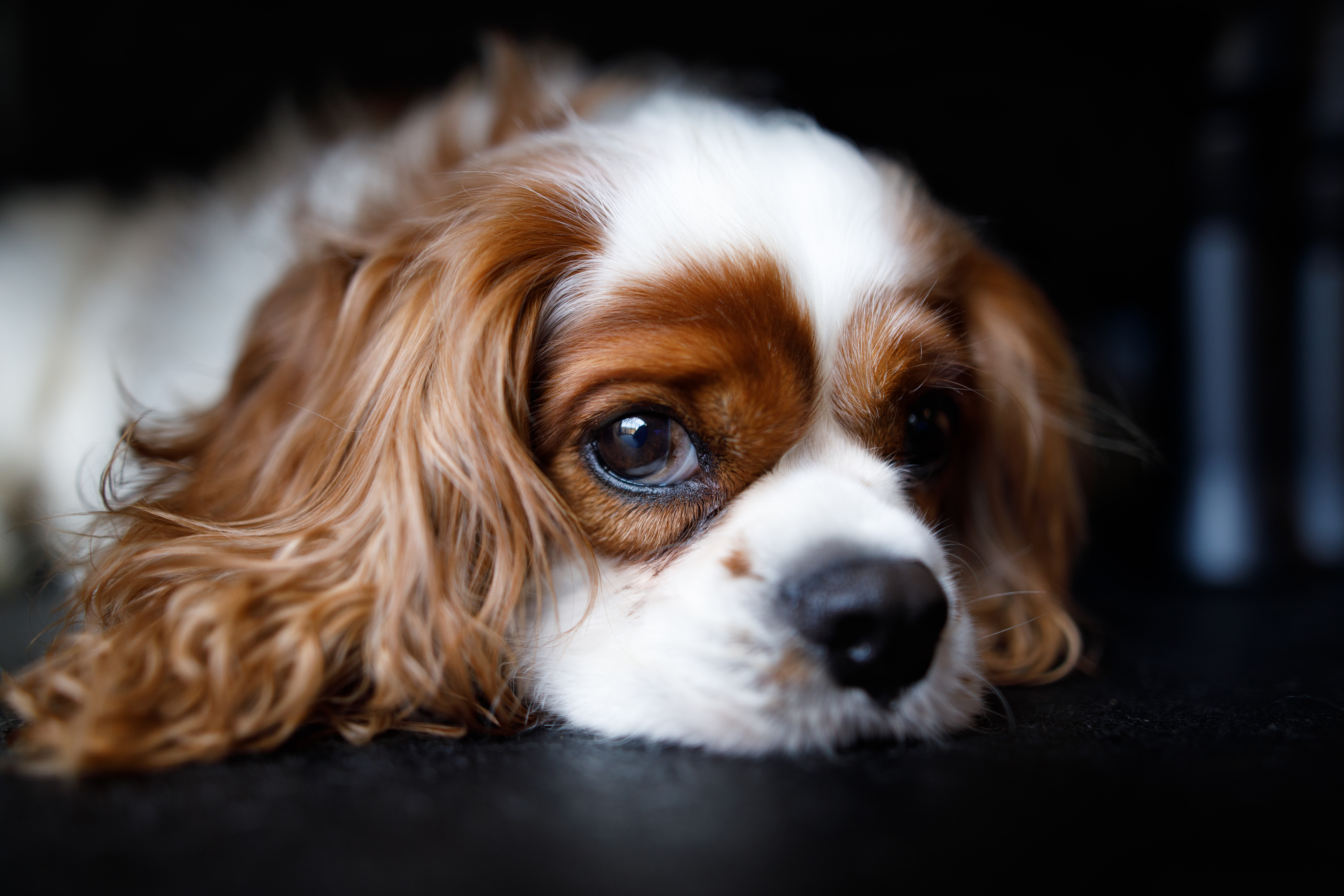 The Dog Spot-019