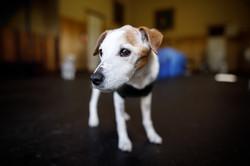 The Dog Spot-035