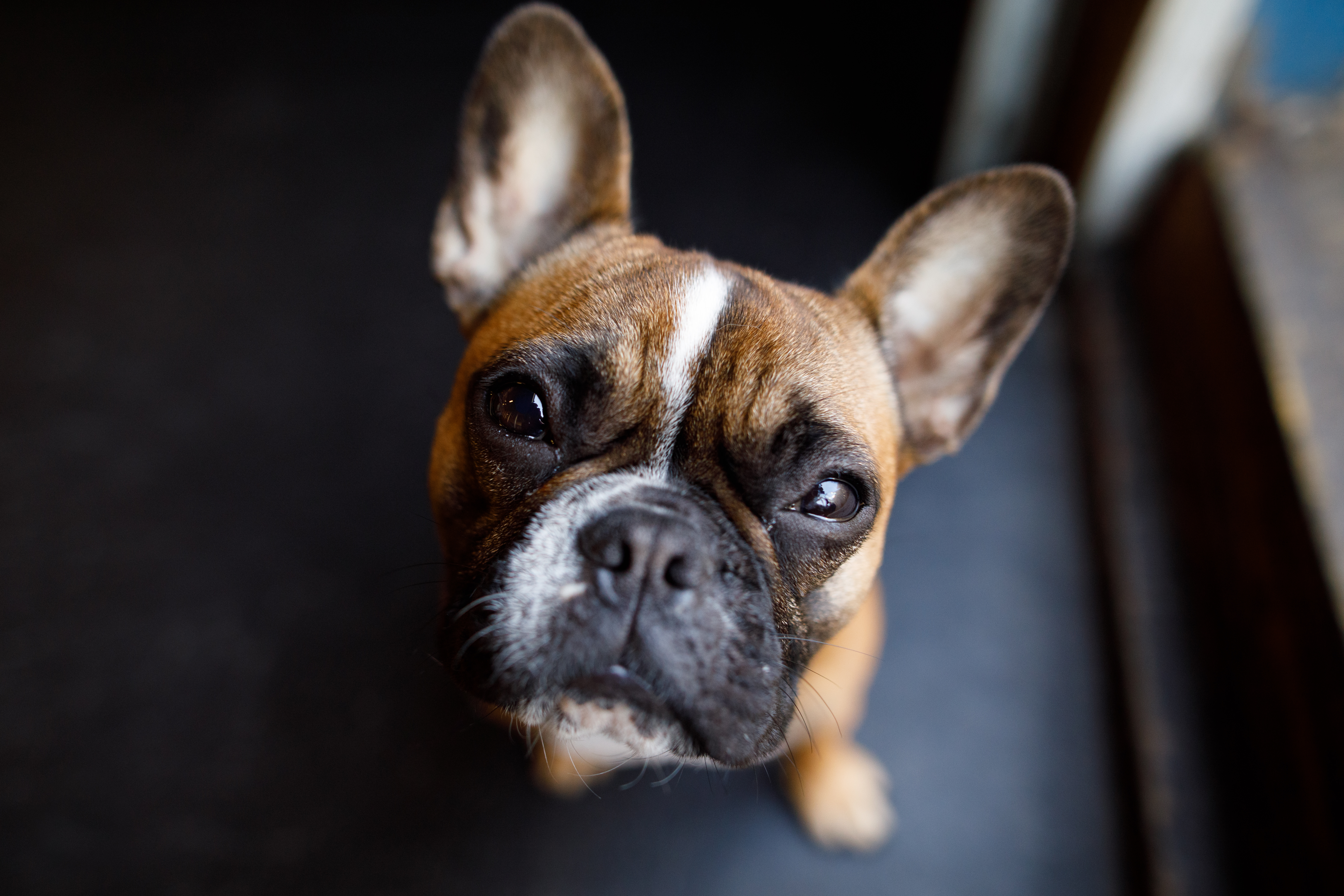 The Dog Spot-029