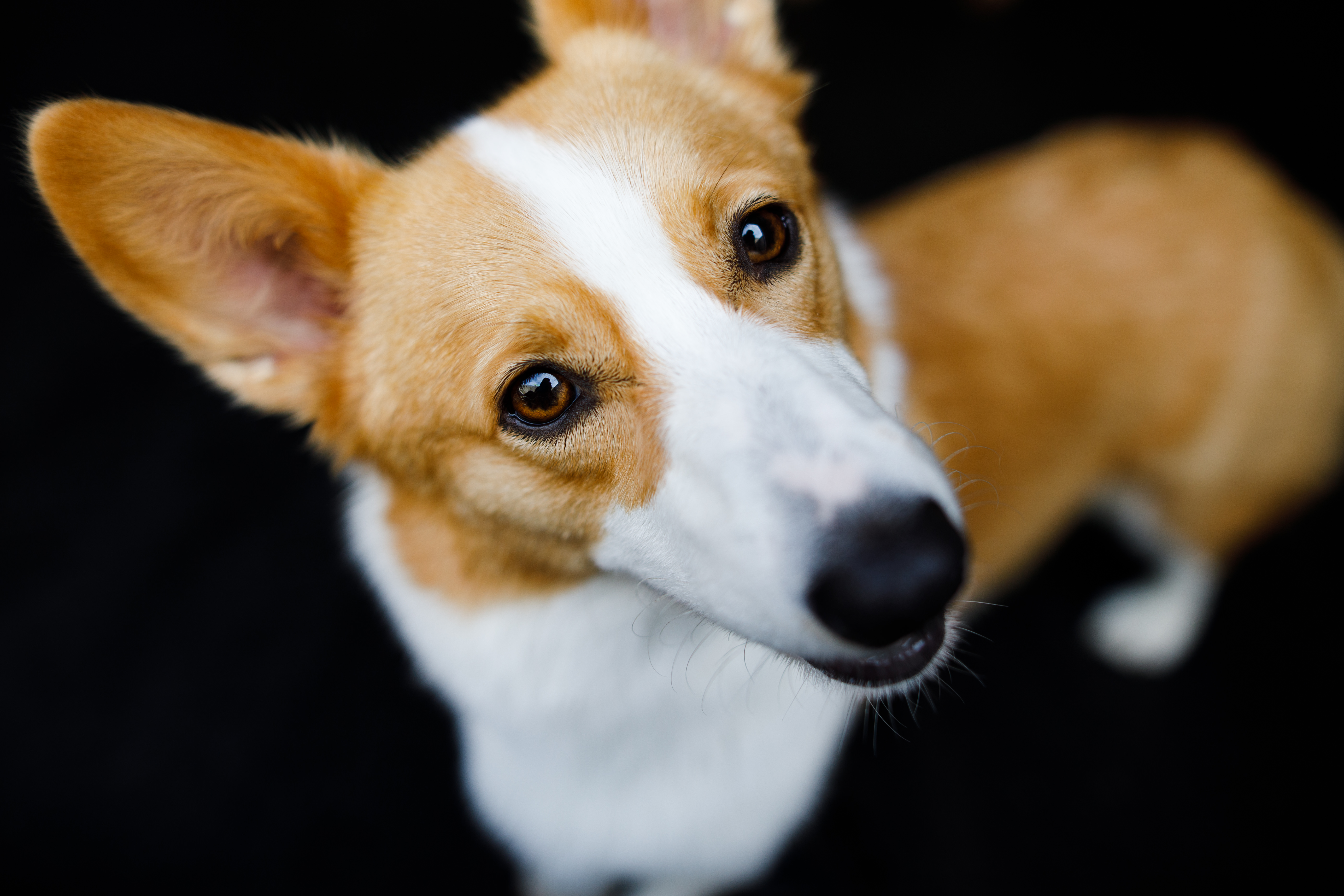 The Dog Spot-044