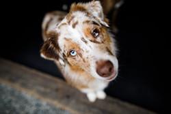 The Dog Spot-037
