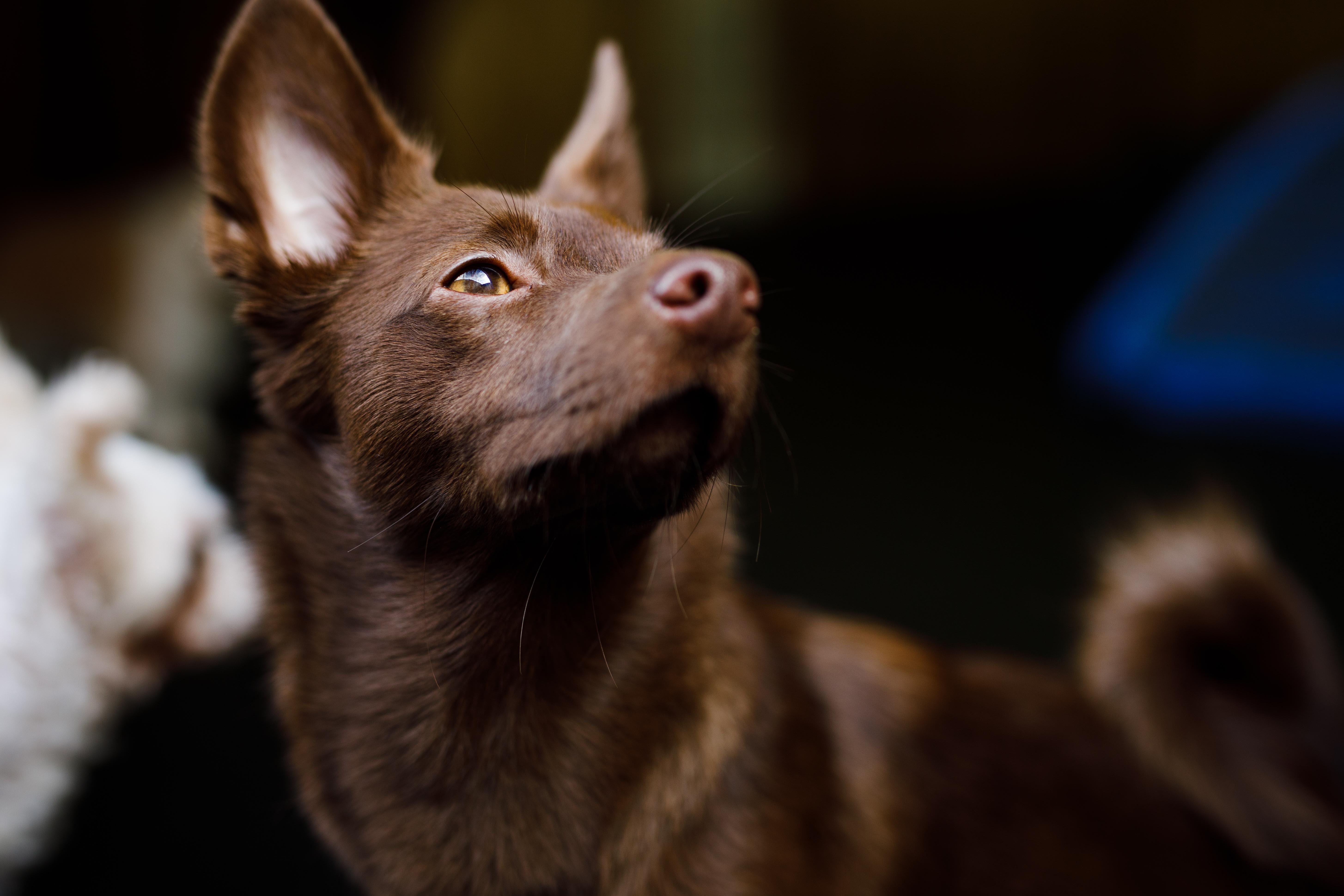 The Dog Spot-062