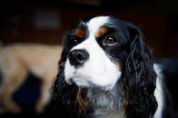 The Dog Spot-039