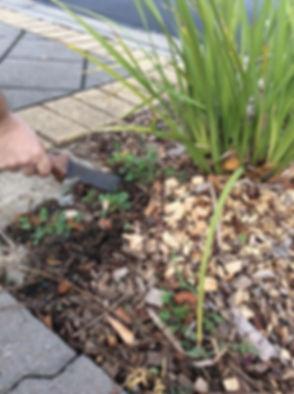 hand weeding_edited_edited_edited.jpg