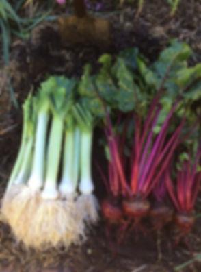 Leeks and beets 2.jpg