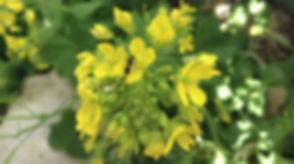 bee native.jpg