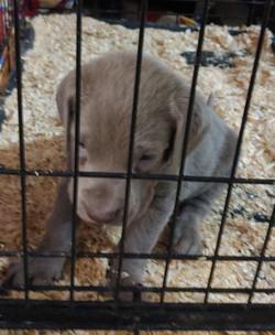 Roxy silver male