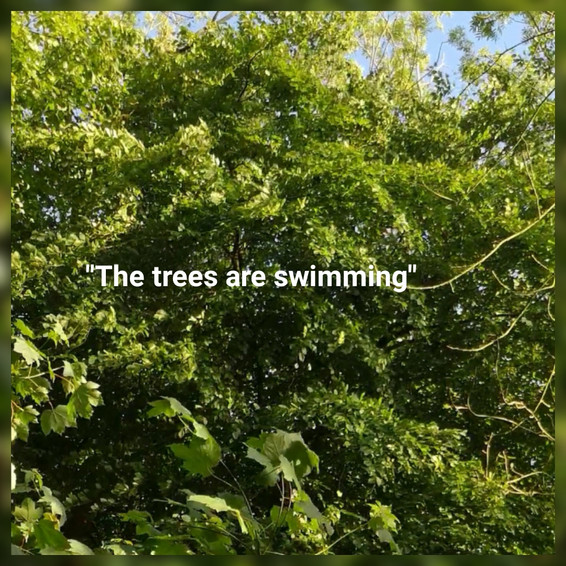 The Trees Are Swimming