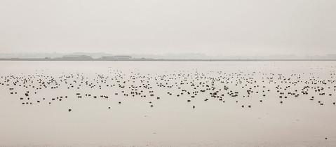 Breydon Water, Winter Birds 2