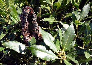 Non-Native Plant 1