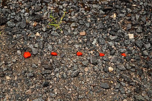 Red on Gravel