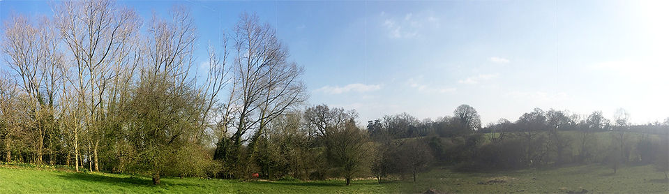 a copse and lower stuff.jpg