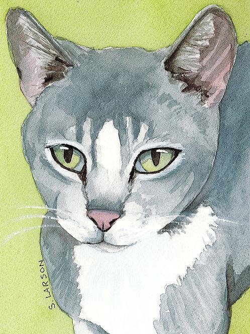 Gray Cat items