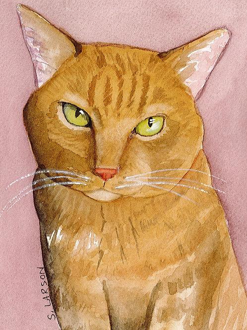 Orange Cat items