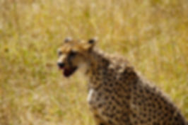 Serengeti4.jpg
