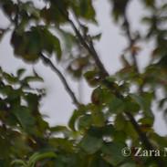 0251©ZaraMader.jpg