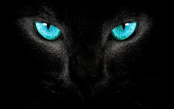 panthereyes.jpg