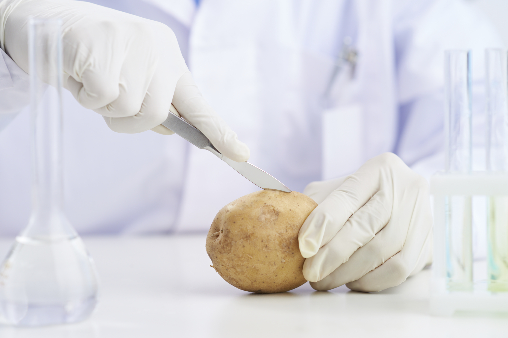 Potato iStock_000025270481Medium.jpg