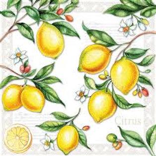 Citrus - Decoupage Napkin