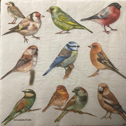 Birds Zoo- Decoupage Napkin