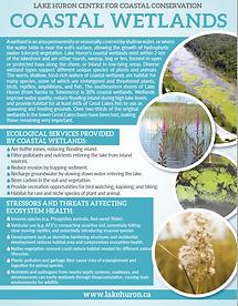 Wetlands.png