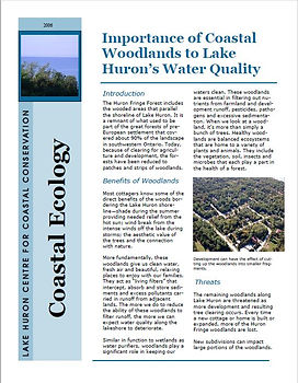 Coastal Woodlands.JPG
