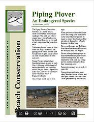 piping plover.JPG