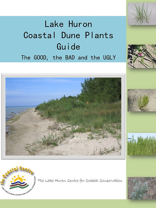 Lake Huron Coastal Dune Plants Guide: The Good, the Bad, and the Ugly