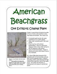 American beach grass.JPG