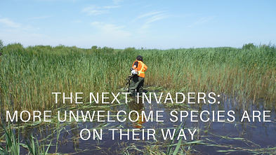 THE NEXT INVADERS_ MORE UNWELCOME SPECIE
