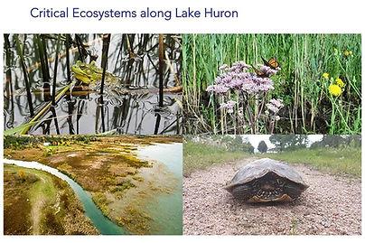 Coastal Ecosystems along Lake Huron.JPG