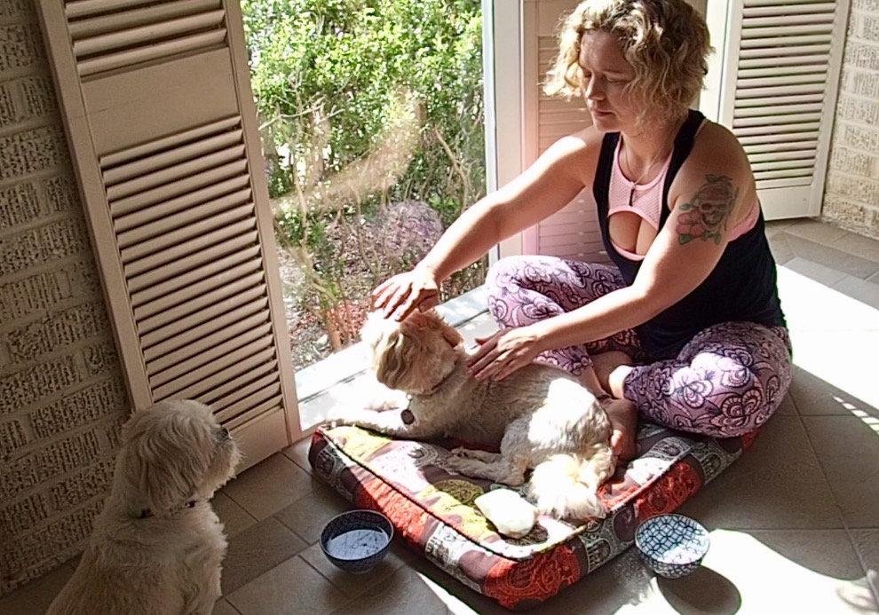 Initial Pet Healing