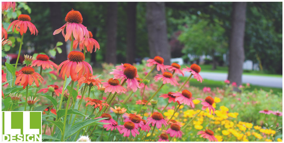 Coneflower Cover.jpg