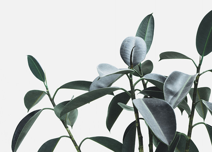 Photo of plant with dark green leaves