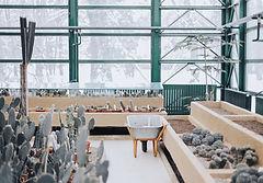 Buy Houseplants