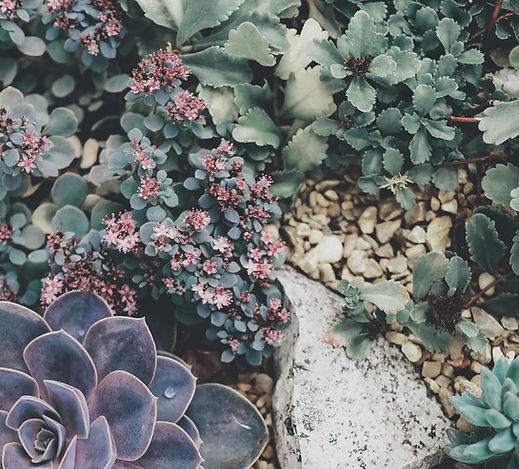 Prickle Emporium
