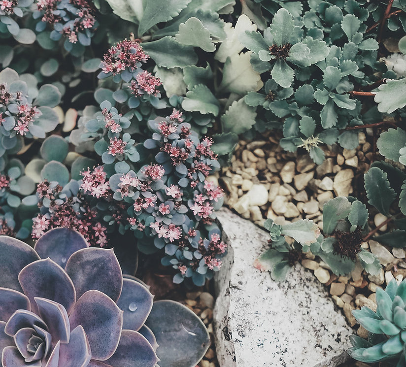 Pepiniere en ligne vente plantes paysagiste bayonne