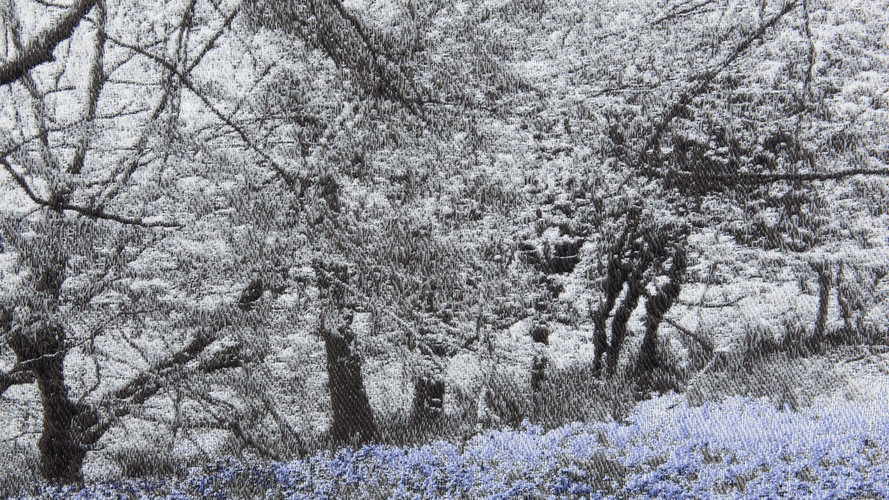 In the Breeze of the Bluebell Wood Detail 002