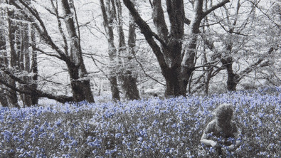 In the Breeze of the Bluebell Wood Detail 005