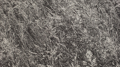Whisper Grass and Meadows, Detail 001, Detail 001