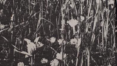 Whisper Daisy Meadows, Detail 002