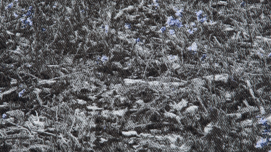 In the Breeze of the Bluebell Wood Detail 003