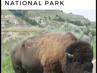 Check Out Our Newest Book - 101 Travel Bits: Theodore Roosevelt National Park
